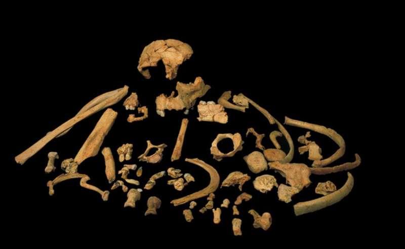First direct dating of Homo antecessor