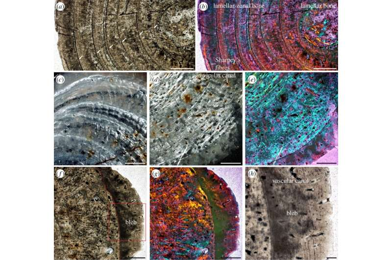Evidence of TB found in 245-million-year-old marine reptile
