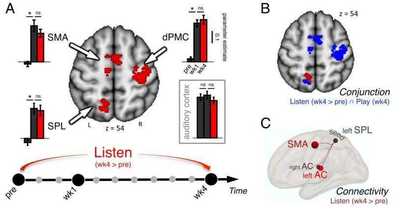 Observing brain plasticity during cello training
