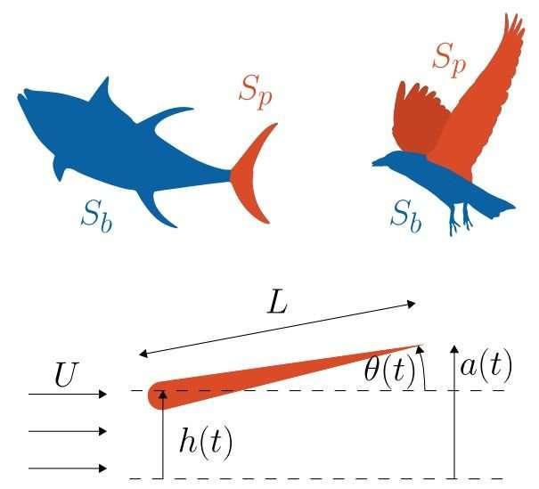 How evolution builds the most efficient airfoils