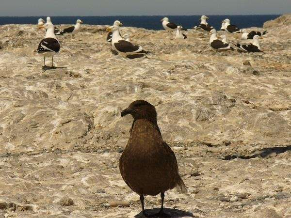 A new study to improve seabird conservation in Patagonian ecosystems