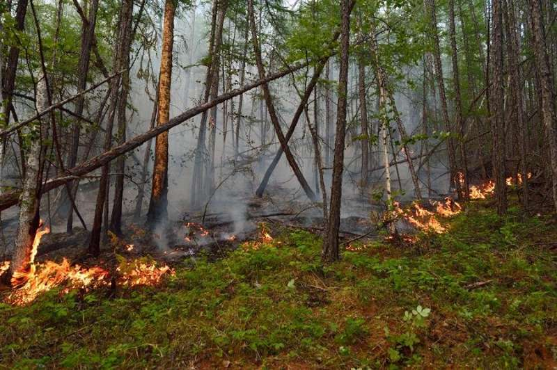 Why wildfires behave differently in boreal forests
