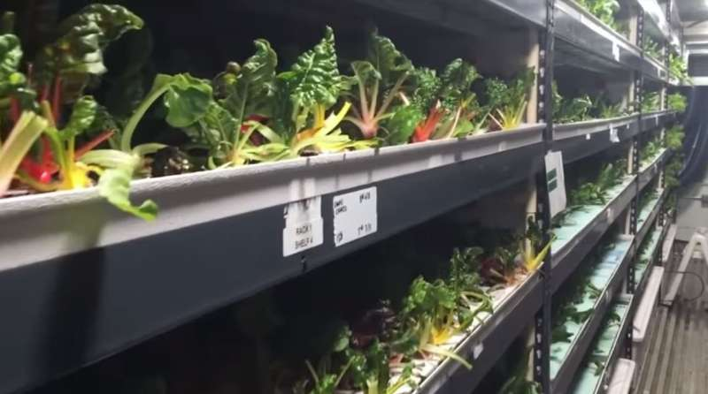 Dubai's vertical farming to help quench thirst for own supply chain