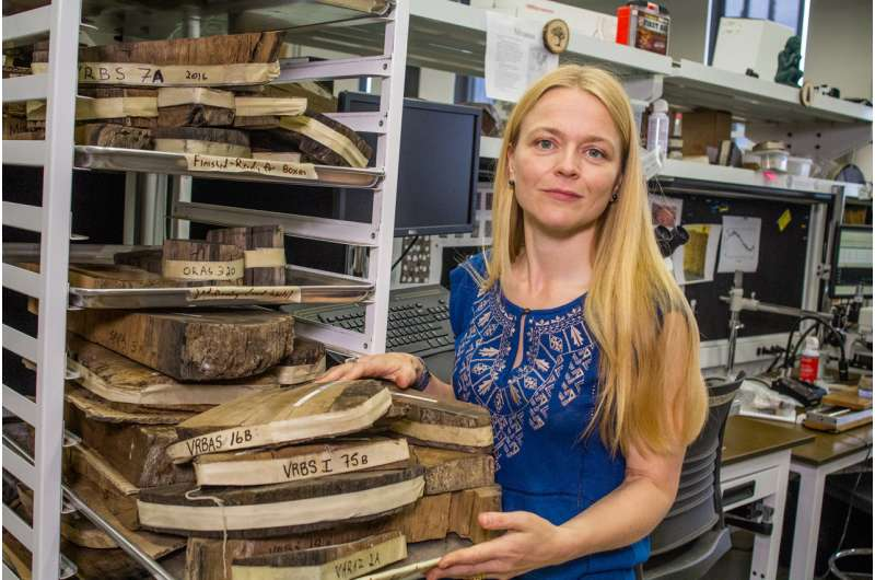 Dating the ancient Minoan eruption of Thera using tree rings