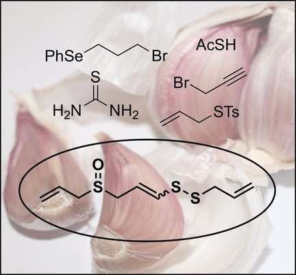 Short total synthesis of ajoene, a biologically active component in oil extracts of garlic