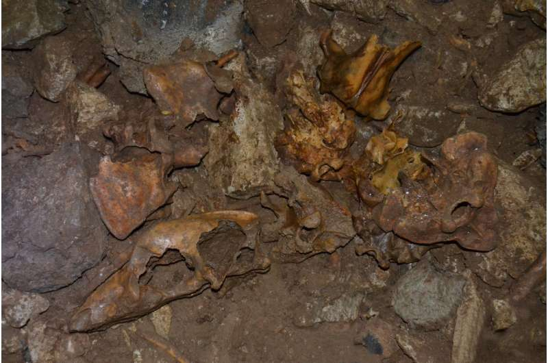 Ancient extinct cave bear DNA found in modern bears