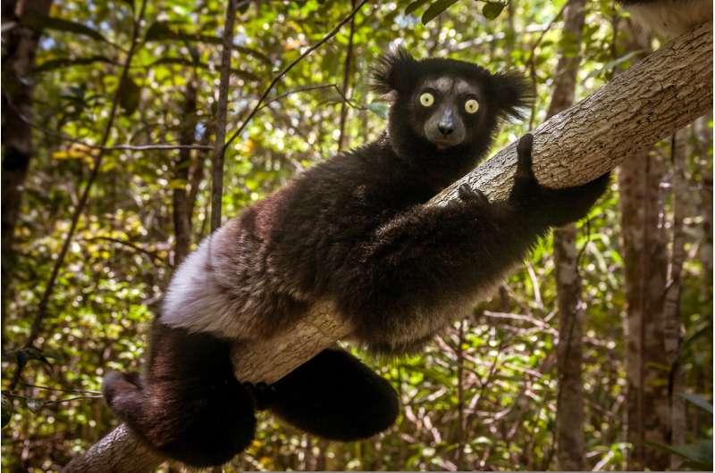 **Mammals cannot evolve fast enough to escape current extinction crisis