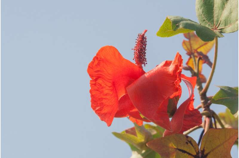 New tool helps align investment with objectives in biodiversity conservation