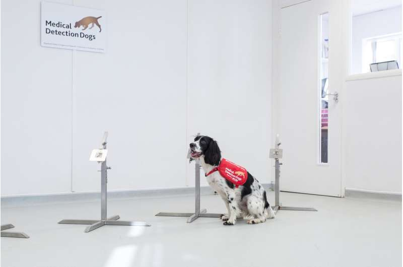 Sniffer dogs could detect malaria in people