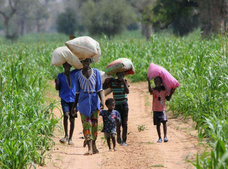 Can organic production be the driving force for development in Africa?