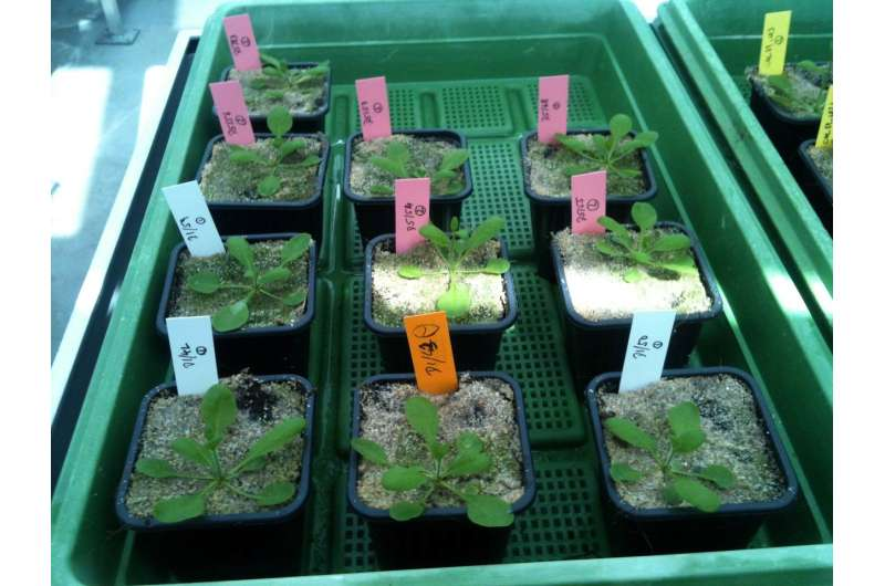 Exploiting epigenetic variation for plant breeding