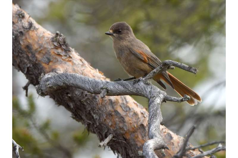 Conservation areas help birdlife adapt to climate change