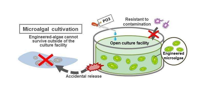 New biocontainment strategy controls spread of escaped GMOs
