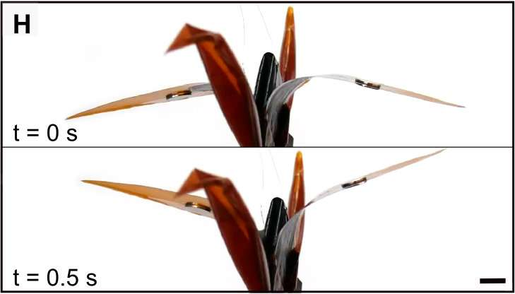 **Researchers find adding silicone oil enhances contracting force of self-zipping origami robots