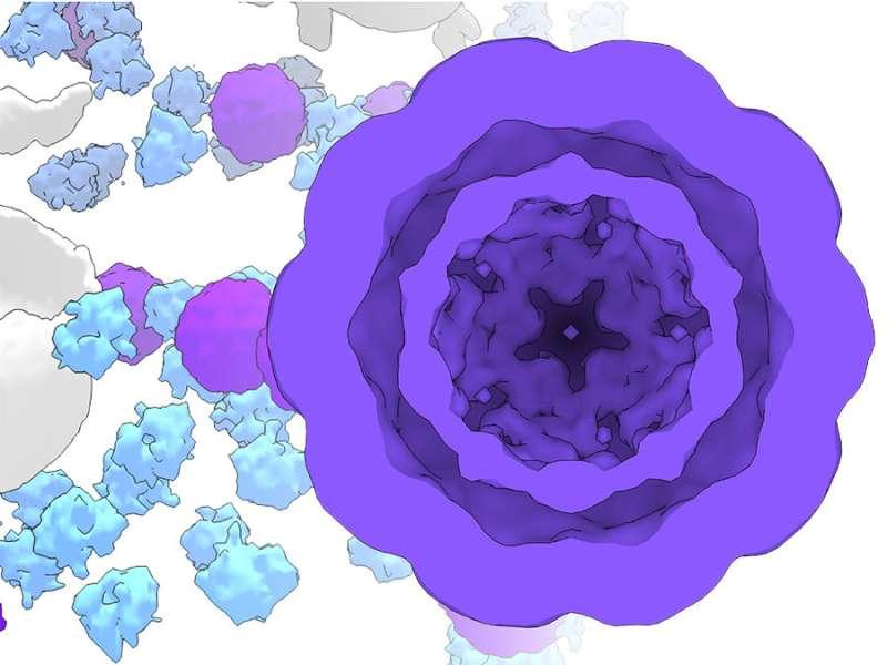 Researchers build artificial cellular compartments as molecular workshops
