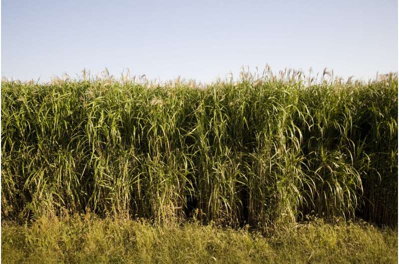 Scientists debunk potential link to crop cold tolerance