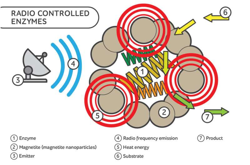 Scientists developed enzymes with remote control