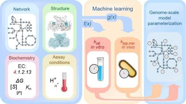Understanding metabolic processes through machine learning