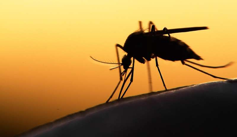 Researchers study link between glucose metabolism and malaria