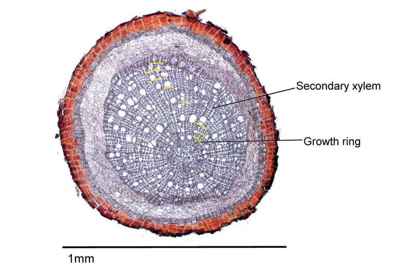 Researchers unravel the age of fine tree roots