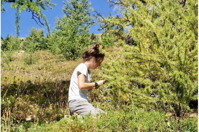 Climate change-induced march of treelines halted by unsuitable soils: study