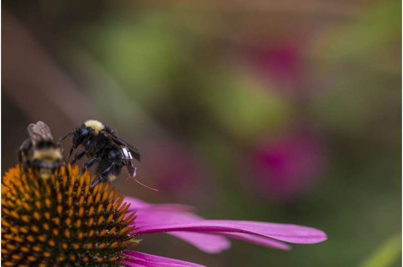 Researchers create first sensor package that can ride aboard bees