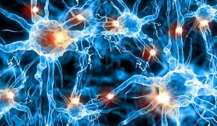 Breakthrough discovery in neurotransmission