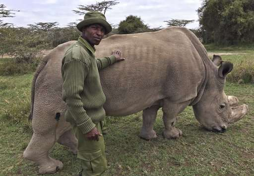 World's last male northern white rhino, Sudan, dies
