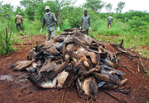 87 endangered vultures poisoned by poachers in Mozambique