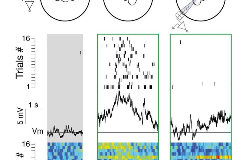 Neuroscientists identify brain circuit that integrates head motion with visual signals