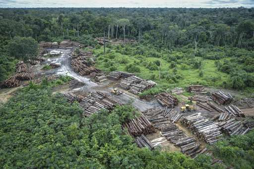 Scientists warn new Brazil president may smother rainforest