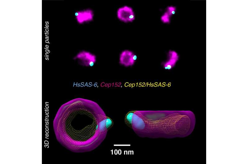 Super-resolution microscopy builds multicolor 3D from 2D