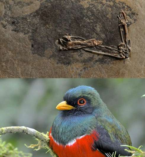 Scientists discover how birds and dinosaurs evolved to dazzle with colourful displays