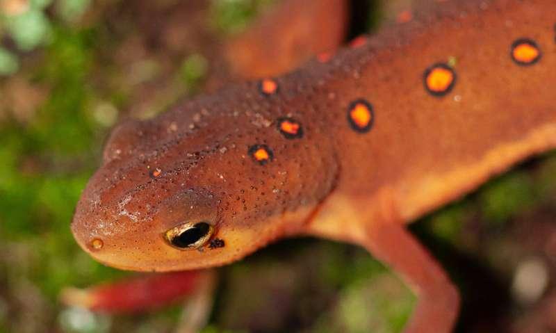 Climate change not main driver of amphibian decline