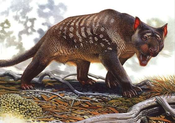 Climate change the likely killer of Australian marsupial lion