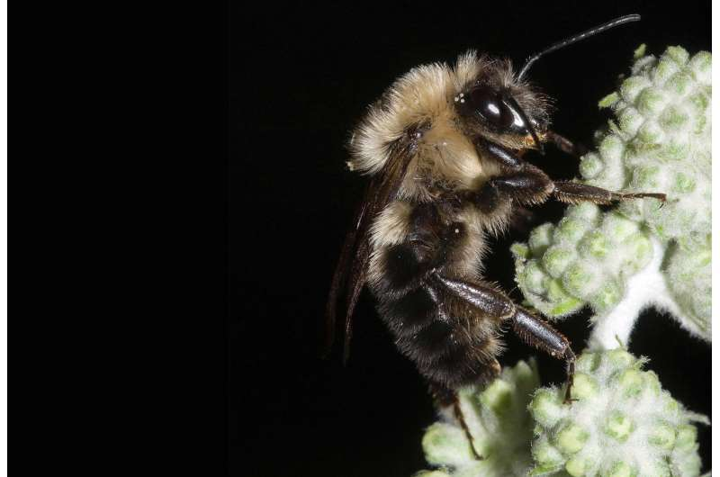 A break from the buzz: bees go silent during total solar eclipse