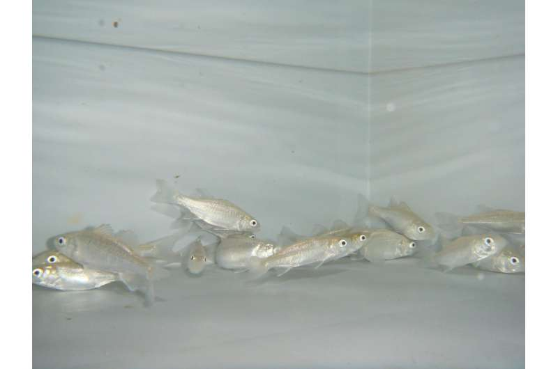 Acidic oceans cause fish to lose their sense of smell