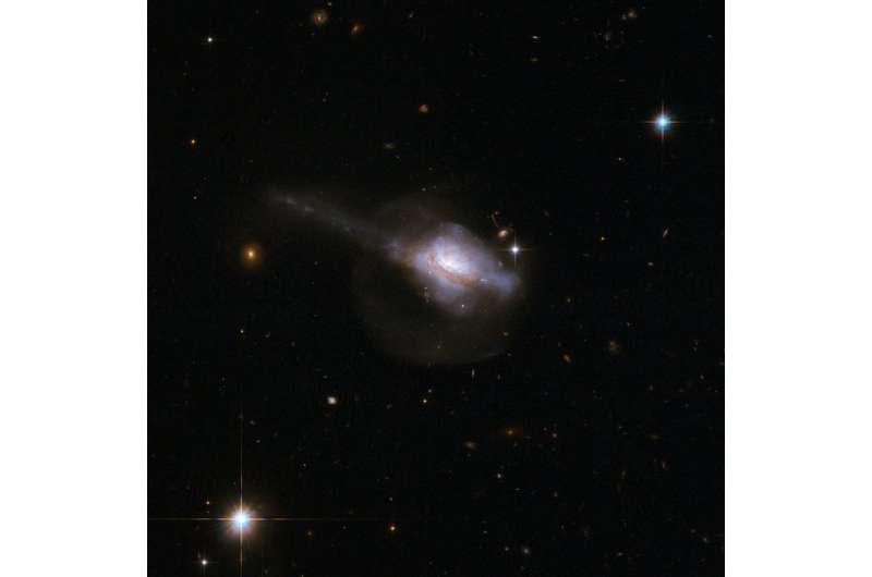 Active galactic nuclei and star formation