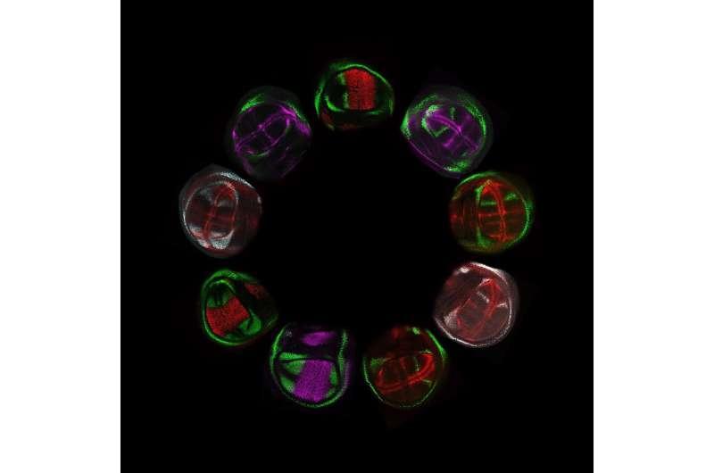 Active genetics technology opens new horizons