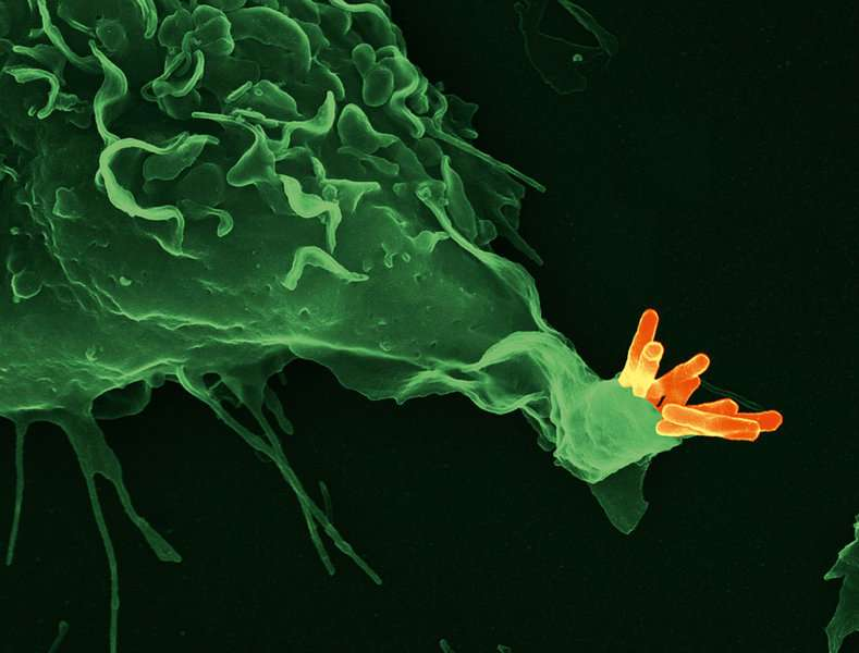 Activity of two genes able to predict active tuberculosis