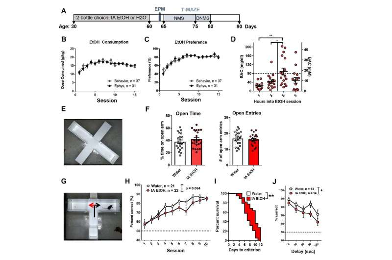 Adolescent binge drinking disrupts mouse memory in adulthood