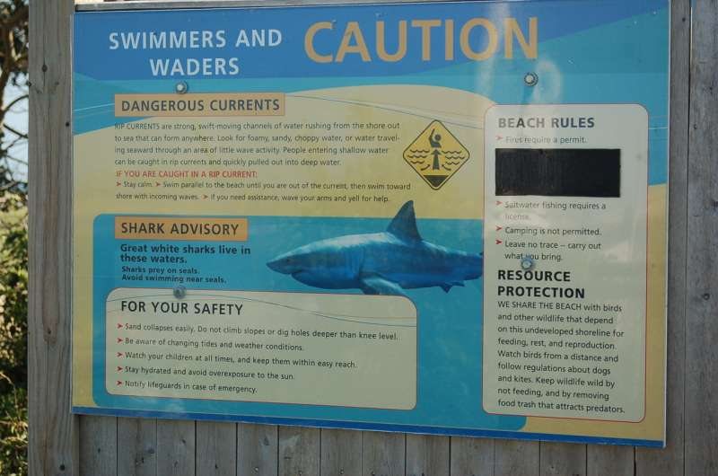 After a fatal shark attack on Cape Cod, will the reaction be coexistence or culling?