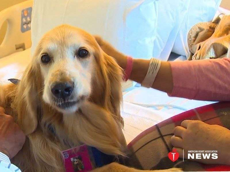 AHA: therapy dogs like katie are good medicine after stroke