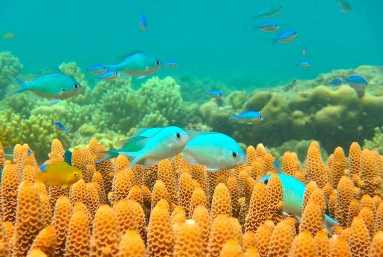 A marine heatwave in 2016 killed off nearly 30 percent of Australia's Great Barrier Reef