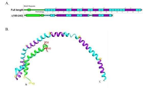A molecular look at nascent HDL formation