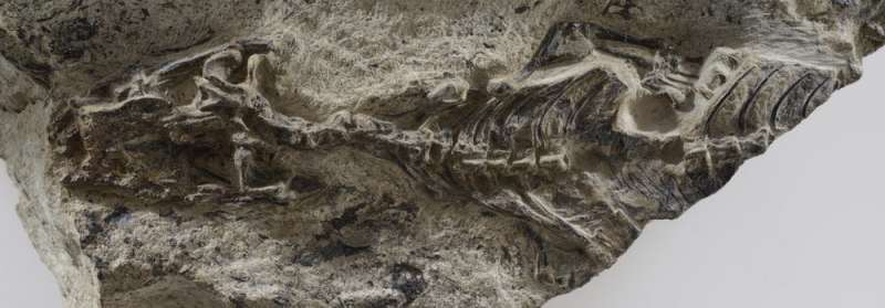 Ancient fossil fills a 75 million-year gap and rewrites lizard and snake history