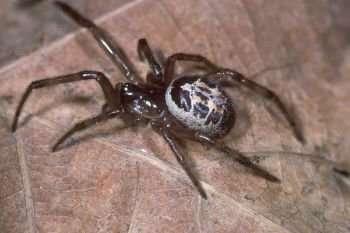 An end to arachnophobia 'just a heartbeat away'