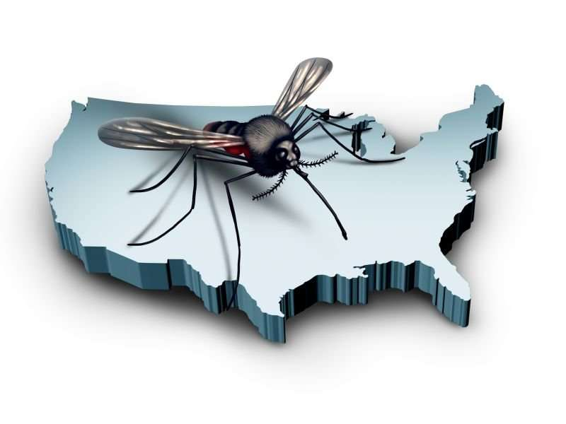 A new way to thwart disease-spreading mosquitoes