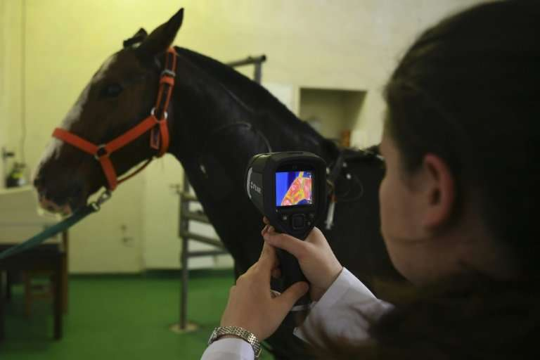 A researcher at Argentina's La Plata University performs a test on a polo horse to learn about its genetic makeup