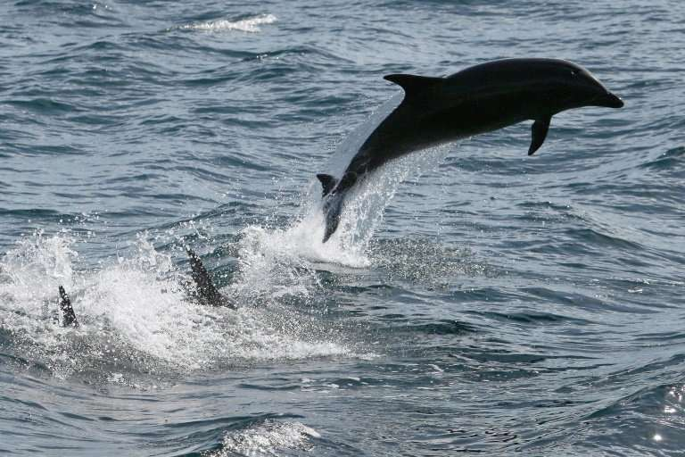 A reward of up to $11,500 is being offered for information leading to the capture of the killer of a pregnant bottlenose dolphin